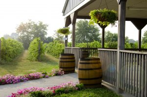 VQA submissions made easier for Colio Estate Wines with vintrace